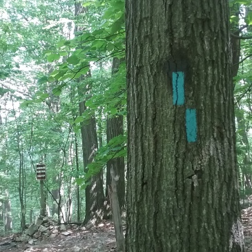 Painted blue trail blazes on a tree trunk